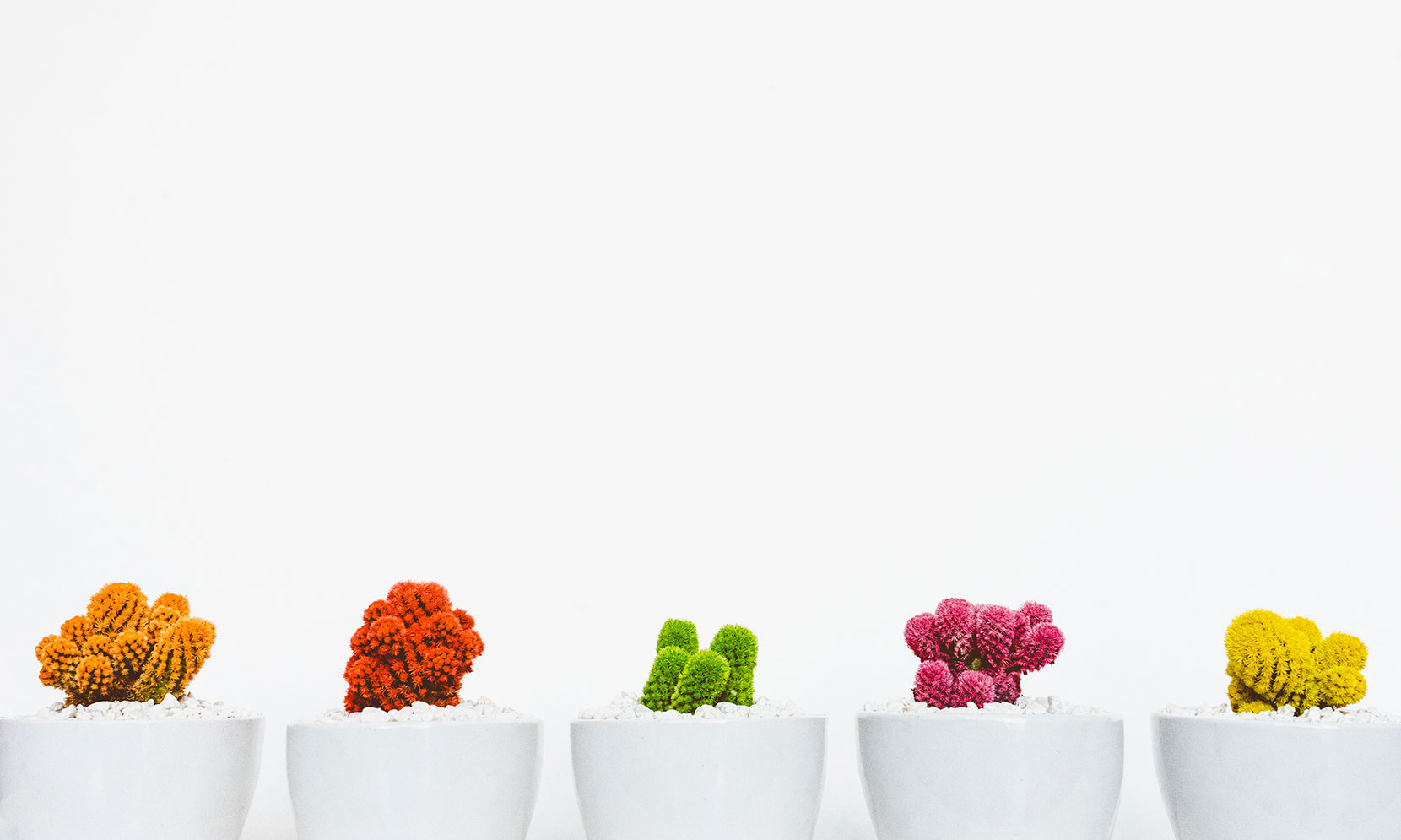 Colored cactus